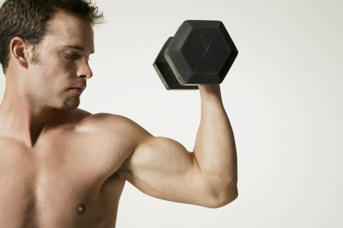 Muscle bras, tout connaître !