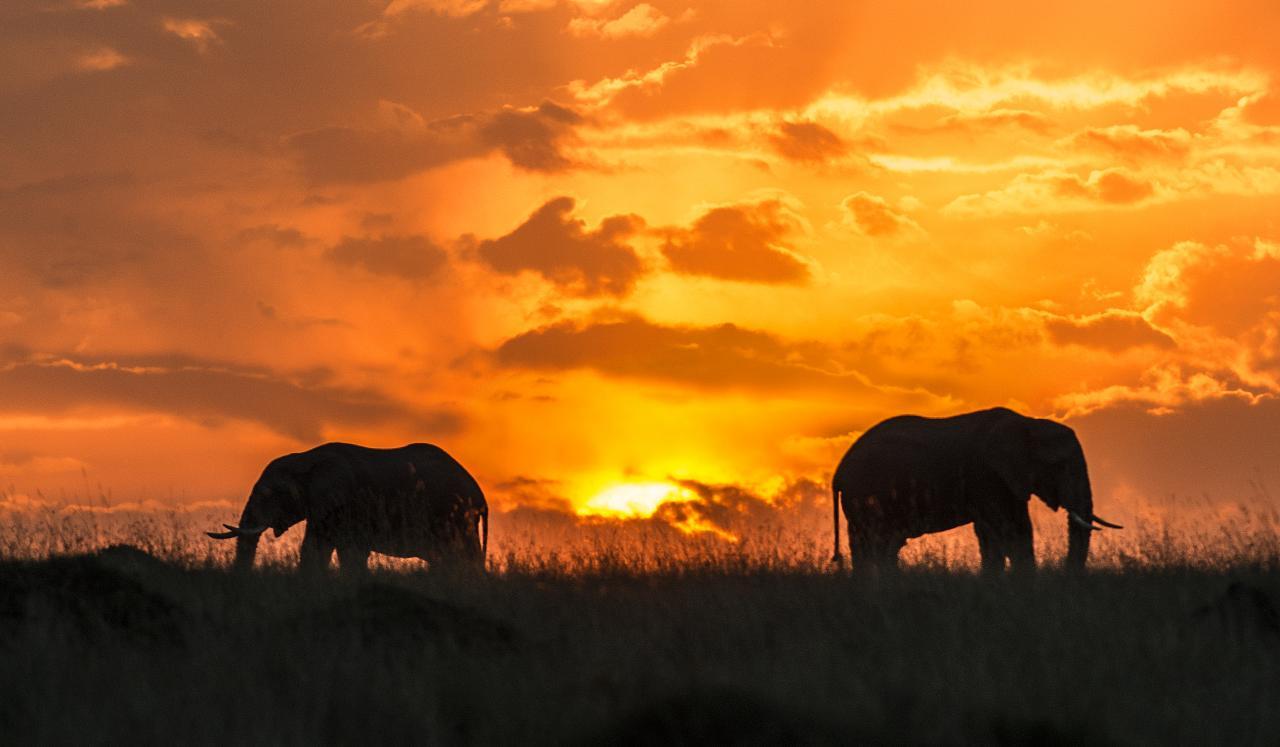Un safari en Afrique, un rêve qui se réalise