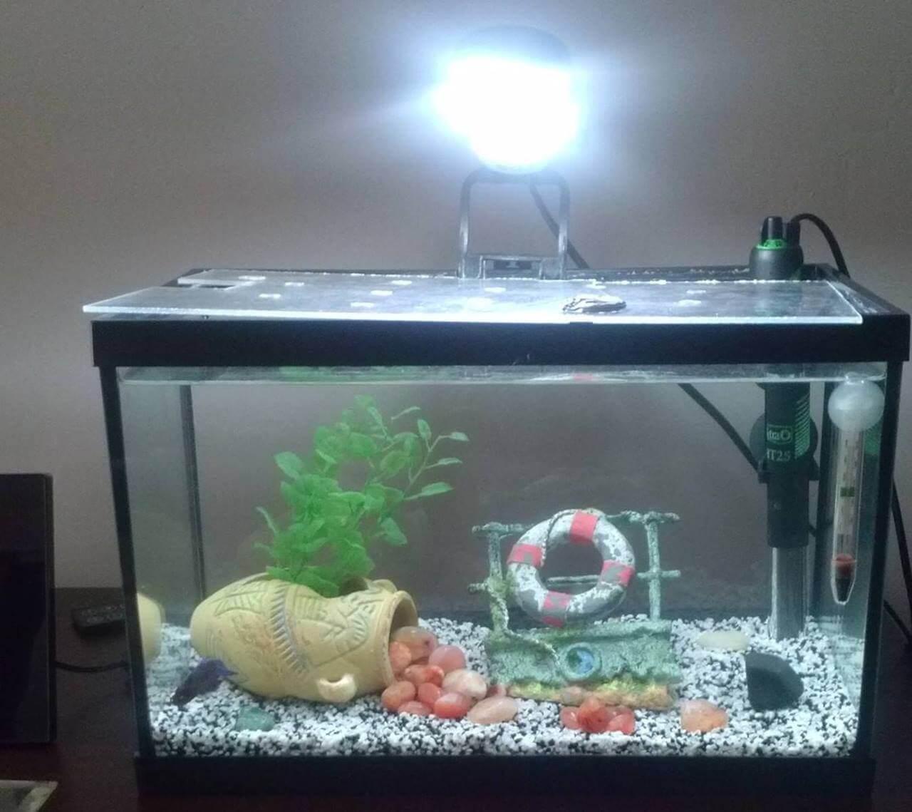 comment mettre une pompe dans un aquarium